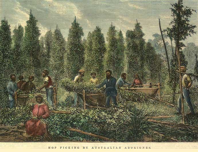 Coranderrk Hop Farming
