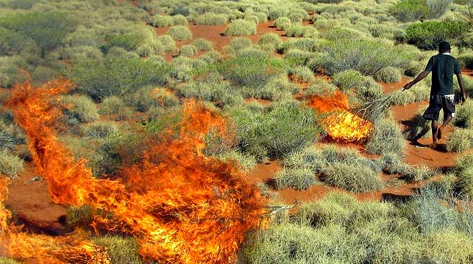 spinifex grass as a way to expose burrows occupied by sand monitor lizards, which are then hunted as a major food source.