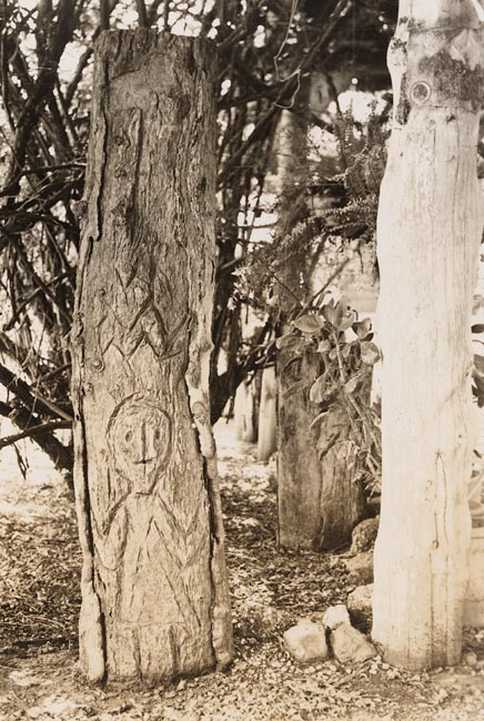 Carved trees of first nations peoples from western new