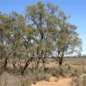 The NSW Biodiversity legislation direct assault on Aboriginal culture, spirituality
