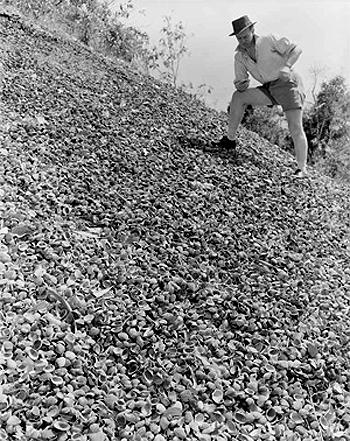 Shell Midden, Weipa Queensland