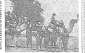 Constable Vigo (on left) returns to Oodnadatta with camel team and five aborigines as prisoners. Article: http://tiny.cc/trove-1933-article